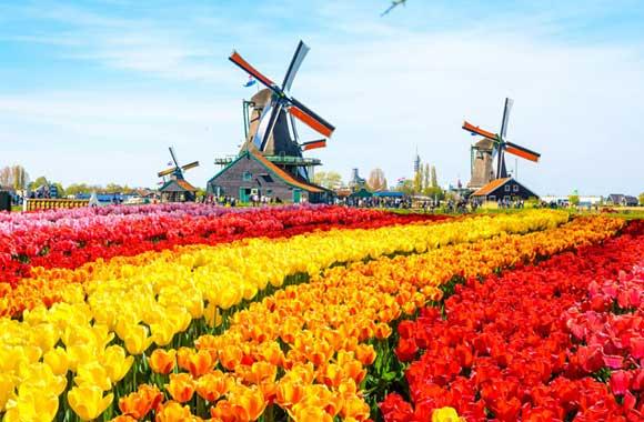 Keukenhof&tulip
